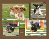 Clauss 2009 4-dog montage