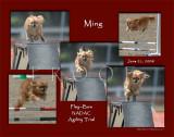 Murphy 11x14 5-photo montage