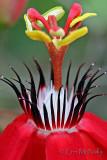 Flowers (vertical)