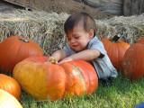Joseph at the Big Orange Pumpkin Farm
