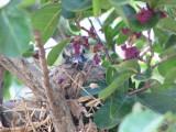 It's the baby dove!!! It's BIG!