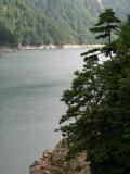 Pine trees jutting over the reservoir