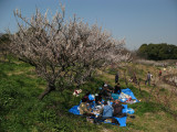 Early spring picnic at Sōri-ike