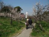 Strolling through the ume trees, Sōri-ike
