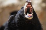 2008 China trip-Bear