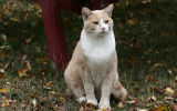 someones cat.jpg