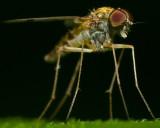 Assorted Flies