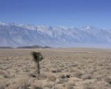Joshua Tree With Sierra Nevadas