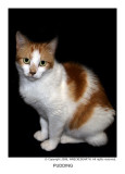 portraits_of_my_rescued_cats