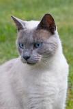 Tippen, a rescue cat