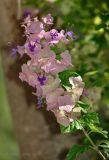 flower id