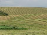 Inkom Farmland Canon S3IS IMG_1159.jpg