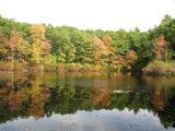 Walden Pond - Concord, Mass.