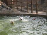 Kostya's First Swim