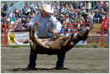 luxton_pro_rodeo