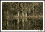 Lincoln County Pond--Early Morning