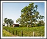Early Morning Mighty Oaks and Barn