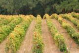 Wine country, California
