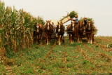 Amish Impressions