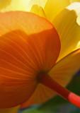 _MG_0433 Kind of Flower?  Hanging in basket on porch ;-)