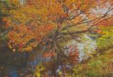 _MG_2139 Colorful Creek