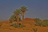 palmtree3.jpg