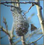 1- Oisillons et nids