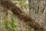 Mousse brune
