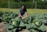 Surendra-K-Pradhan_and_urine-fertilized-Cabbage.jpg