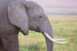 1DX_4463 - Elephant