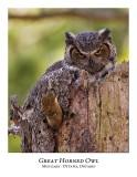 Great Horned Owl-023