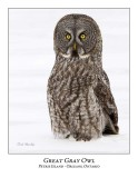 Great Gray Owl-159