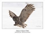 Great Gray Owl-162