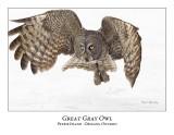 Great Gray Owl-165