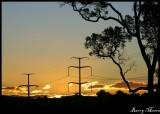Tree-mendous Sunset