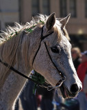 Shanrock on horse