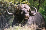 Kruger Park 2004