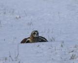 se-owl-on-ground.jpg