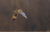SE-Owl-flight.jpg