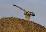 Collins Marsh Birds of Prey