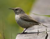 Rare birds - ID and Documentation.