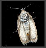 Moth from outerspace 2