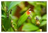 Ameisen vs Spinne  0:2