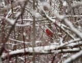 Niagara Winter 2007