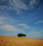 Blue sky- Green trees