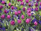 Plasticised Flowers