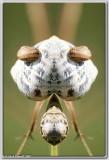 Mutant Snails