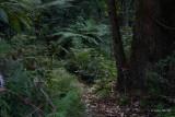 0376 A Walk In The Rainforest