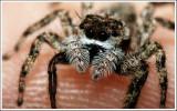 Fingertip Spider