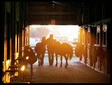 Pony at Sunset II